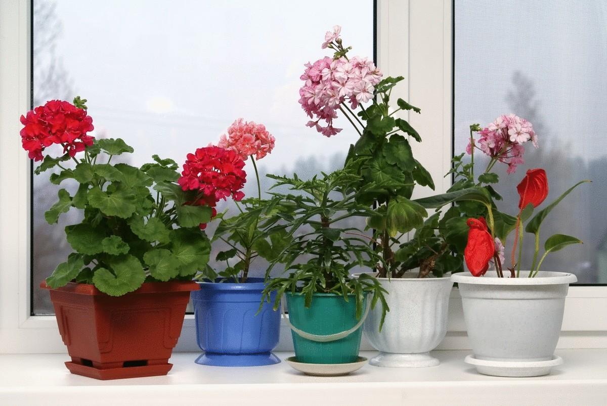 Комнатные цветы - выращивание и уход, каталог комнатных цветов с фото
